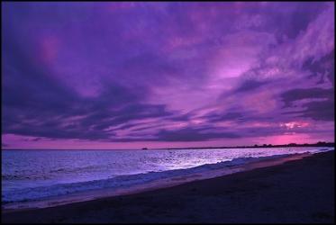 purplesushi