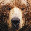 Frizlefrak avatar