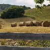 CarrieLockhart avatar