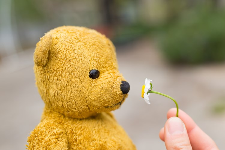 A teddy bear smelling a small daisy