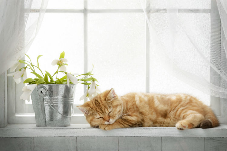 A cat asleep on a windowsill  next to a pail filled with flowers