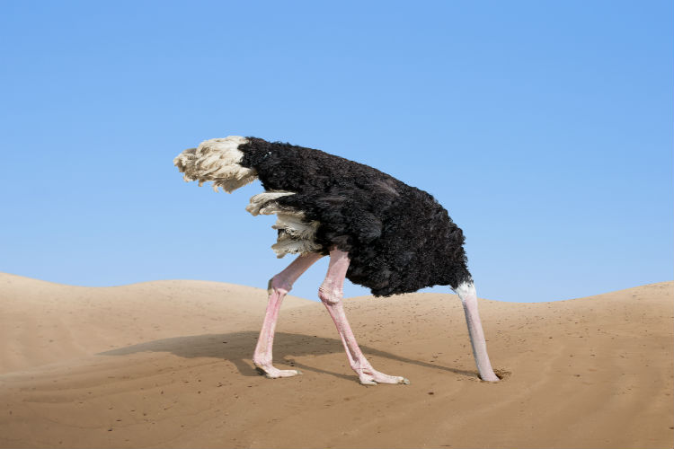 An ostrich sticking its head into a hole in the sand to ignore it's surroundings
