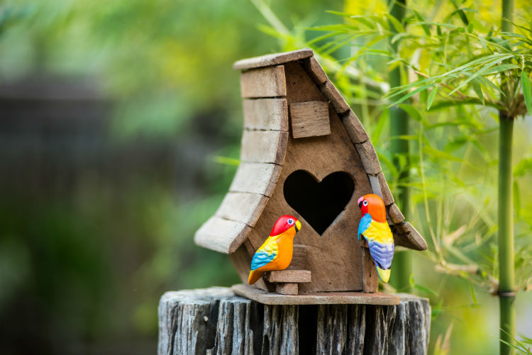 Two Colorful Birds in Front of Birdhouse