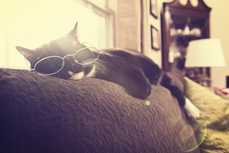 An old cat with glasses on sleeping on a couch pillow