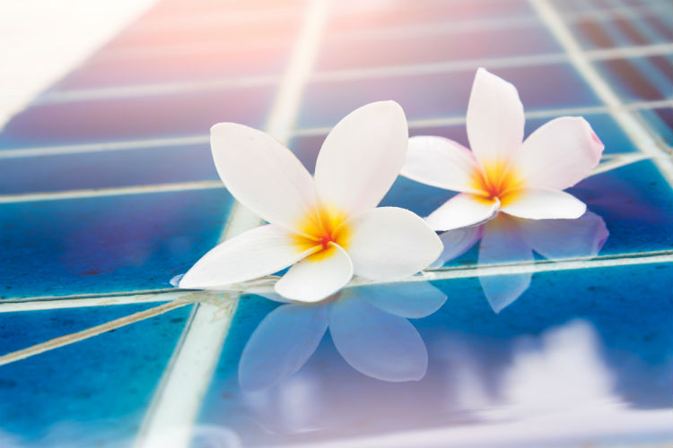 Two flowers floating in pool