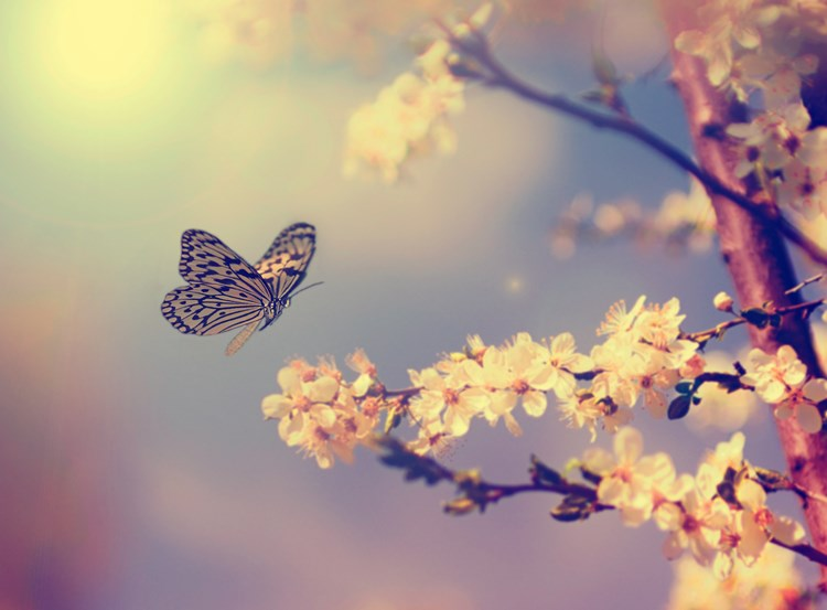 A butterfly landing gracefully on a tree branch