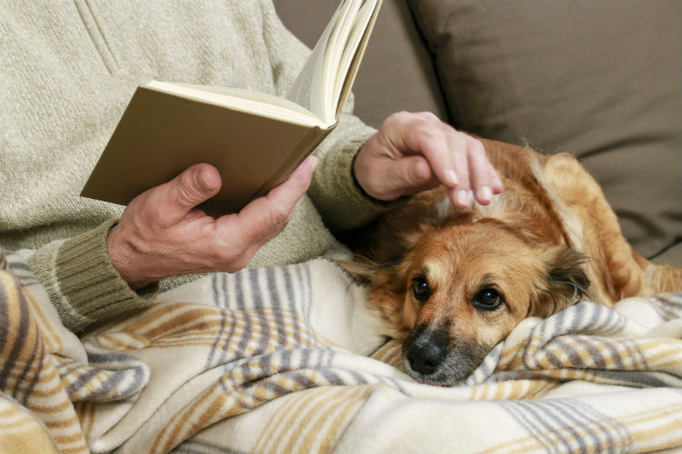 senior man on the couch with his blanket and dog on his lap while reading