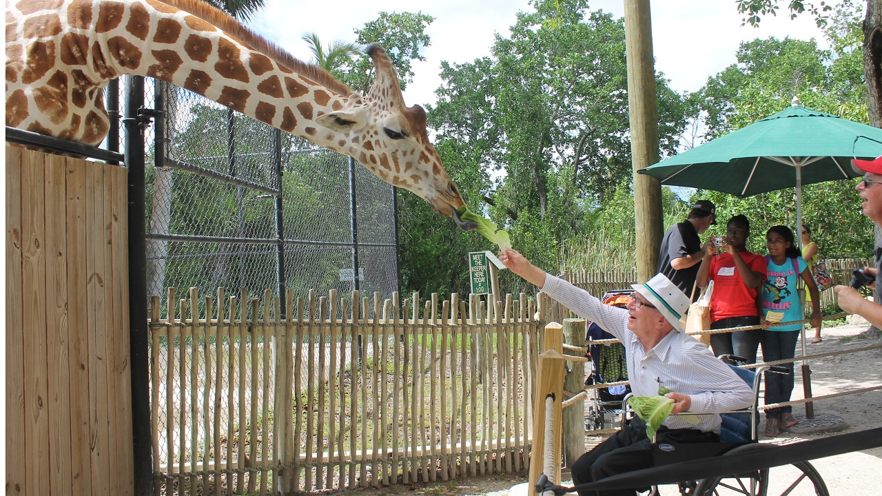 Benefits of Visiting the Zoo with a Senior-Image