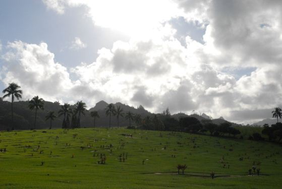 Hawaiian Memorial Park Cemetery at Kaneohe, HI