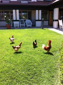 Brookdale Auburn at Auburn, CA