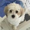 RosieJuly2020 avatar